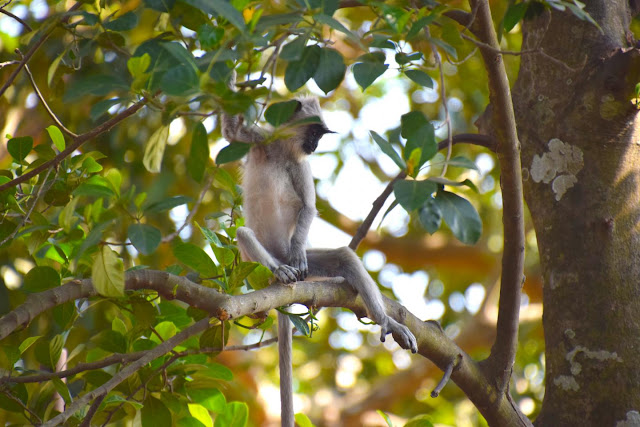 The monkey hunters: Humans colonized South Asian rainforest by hunting primates