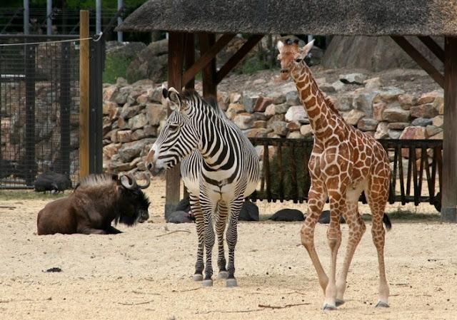 Natura Artis Magistra Zoo