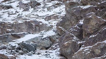 Μπορείτε να εντοπίσετε την λεοπάρδαλη στις φωτογραφίες;