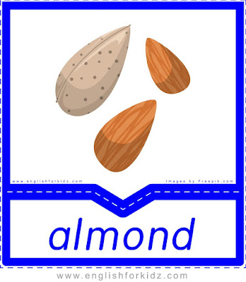 Almond nut - English flashcards for the fruits and vegetables topic