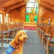 Funeral Therapy Dog Comforts Mourners (Research, Video 2:20)