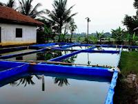 Analisa Usaha Budidaya Ikan Lele 1000 Ekor Menguntungkan