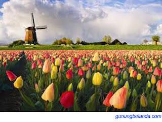 Apakah Kata Tulip Berasal dari Bahasa Belanda