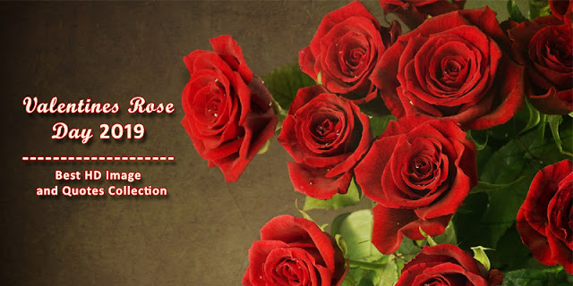 When is Valentines Rose Day 2019,Valentines Rose Day Quotes, Valentines Rose Day Gift Ideas, Valentines Week 2019