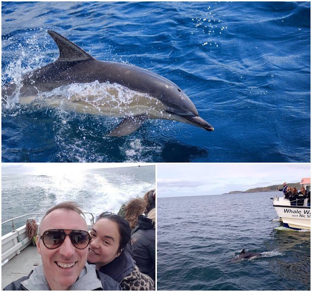 Whale and dolphin watching West Cork Ireland