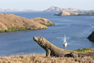 Places Komodo Island