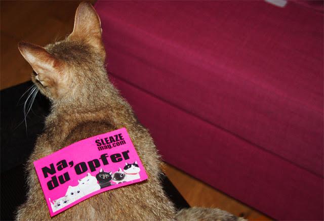 sleazemag.com sticker katzen auf youtube berühmt werden mit eigenen aufklebern