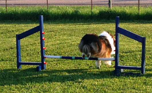 Axel Loves Agility