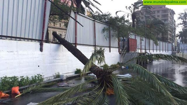 Palmera partida por el viento en Santa Cruz de La Palma
