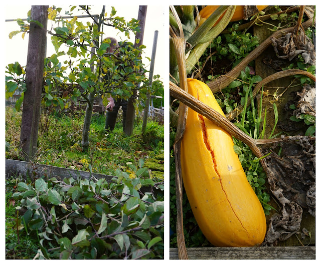 pruning the apple trees and the exploded courgette - Carrie Gault 2018