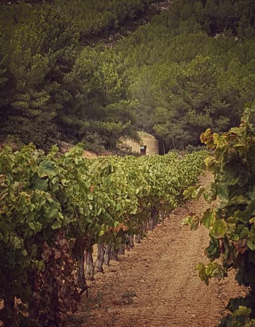 vinya vins de foresta