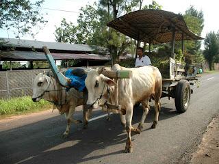 gambar kereta lembuu di Yogyakarta menggunakan tayar kereta