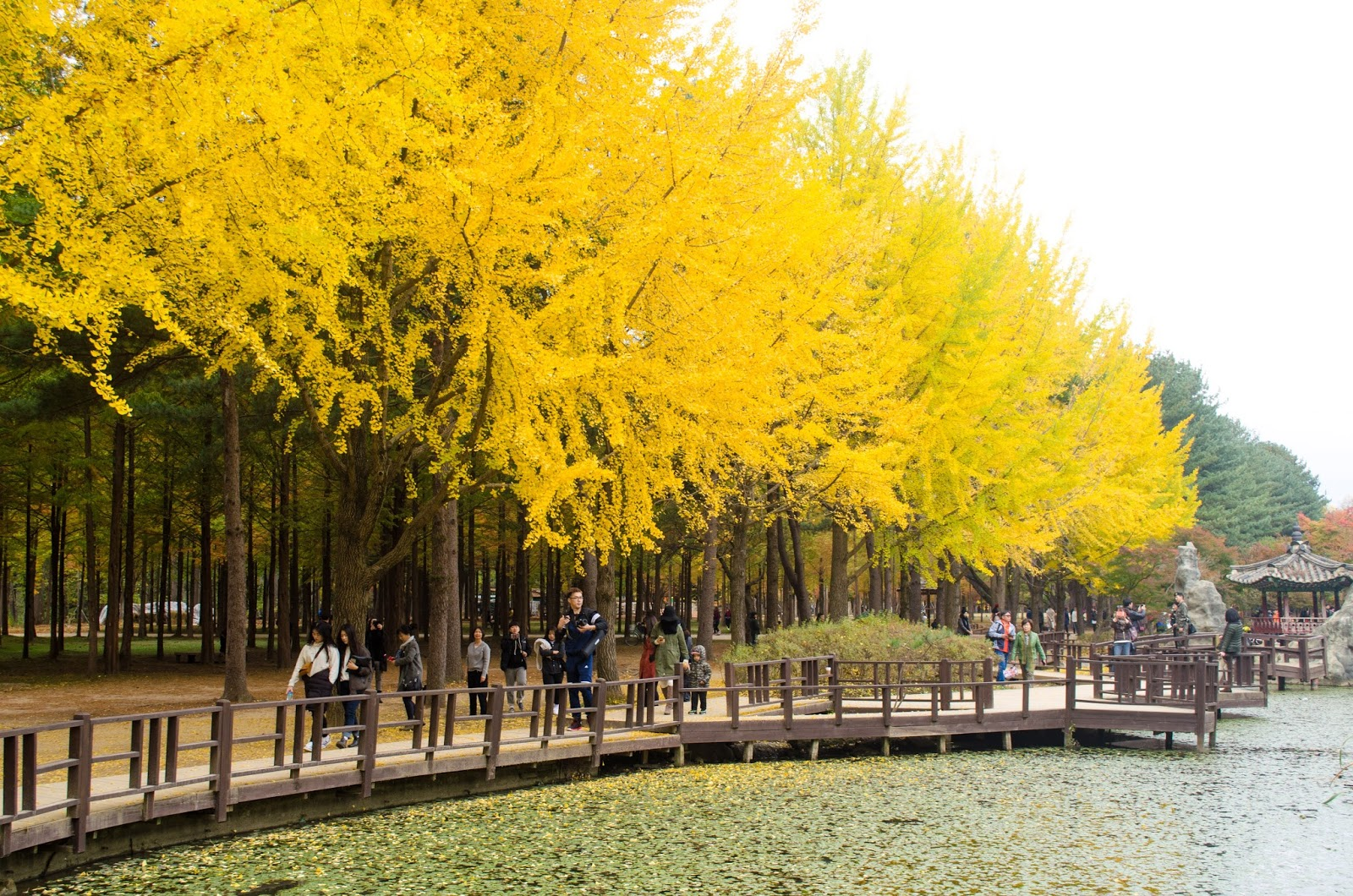 Tempat wisata Korea Selatan saat musim gugur yang harus kamu kunjungi  Padiciti.com