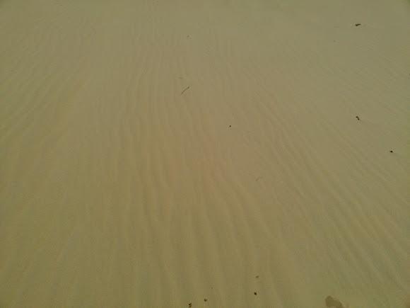 Національний природний парк «Олешківські піски»