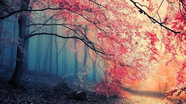 Bos landschap met bomen met roze rode bladeren.
