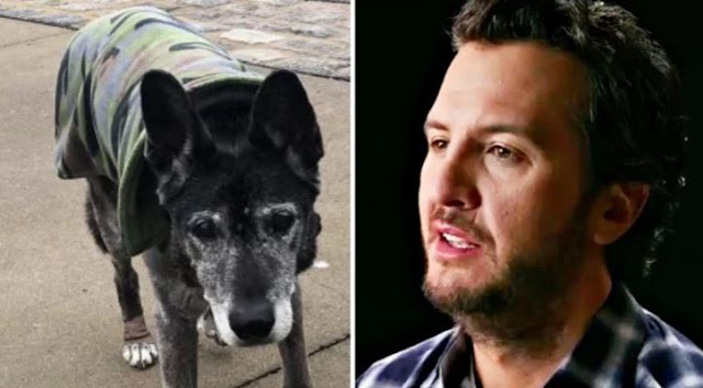 9 Days After Bringing Him Home, Luke Bryan's Dog Has Passed Away
