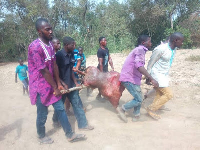 HUNTERS IN KWALI AREA COUNCIL OF FCT KILLS HIPPOPOTAMUS TERRORIZING THEIR COMMUNITY
