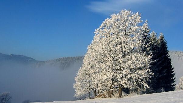 Desktop HD Wallpaper Winter Trees
