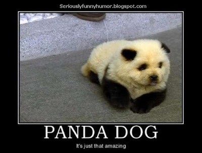 Panda Dog - It's just that amazing - cute meme