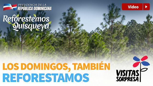 VIDEO: Los Domingos también reforestamos