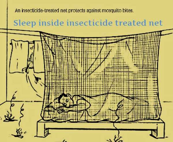 how to stop dogs being bitten by mosquitoes