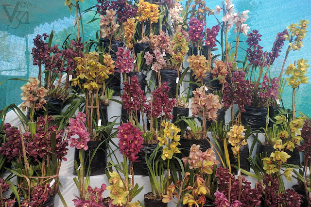 Corner display of various varieties of Orchids