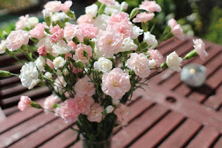 deskripsi bentuk bunga Anyelir
