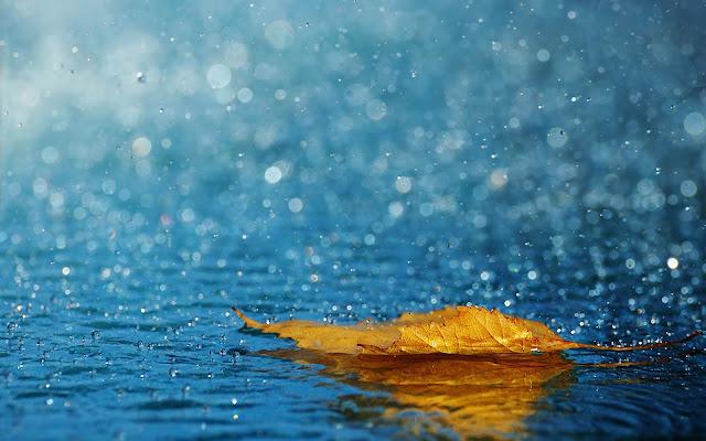 Apakah Air Hujan Baik Untuk Ikan Cupang ?