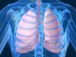 Kambuhnya Penyakit Paru Paru Basah dans paru paru download%2B%25281%2529