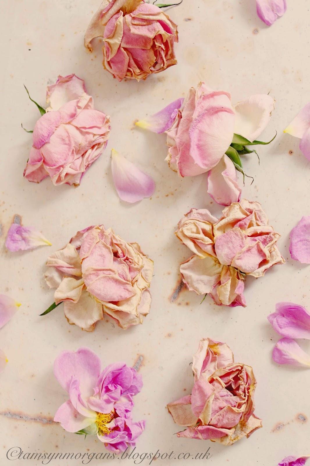 Faded, Shabby Roses
