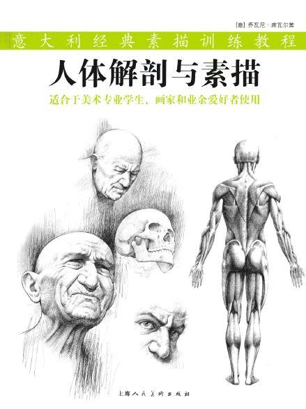 Anatomy Drawing Pdf