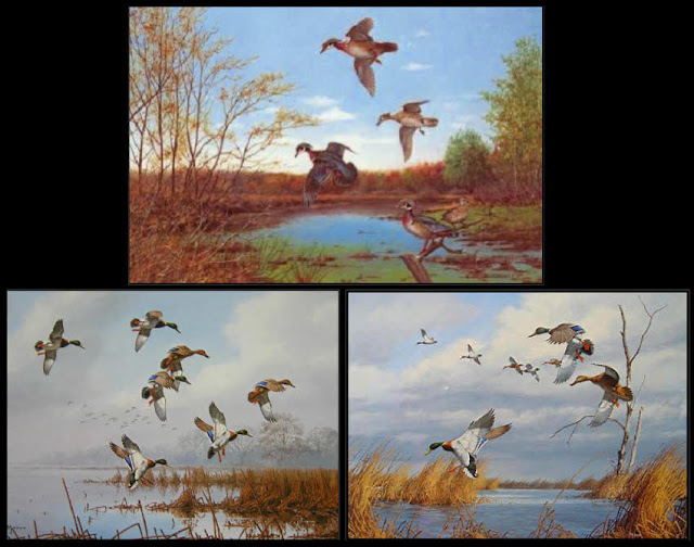 Owen Gromme,David Maass,mallard ducks,wood ducks,autumn,fall,waterfowl,colorful,Wild Wings
