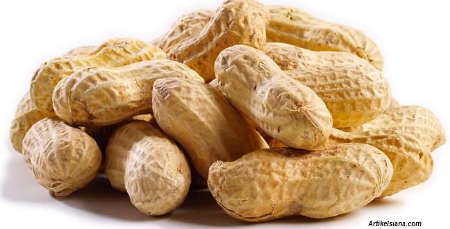 BAHAYA, Kacang Tanah Dapat Mengakibatkan Mual, Muntah dan Kanker Hati hingga Kanker Payudara...