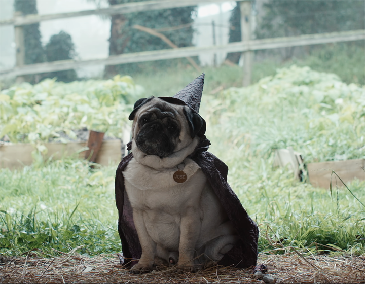 The Dog Film Festival's Game of Bones