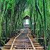 Paket Tour Ke Hutan Mangrove Yogyakarta