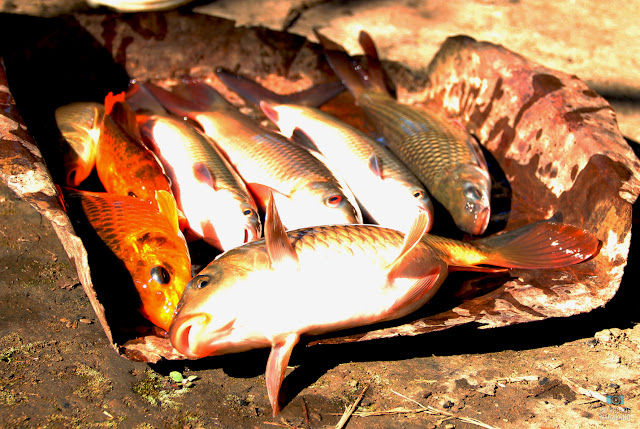 fresh-fishery-fish-photo-nagaland
