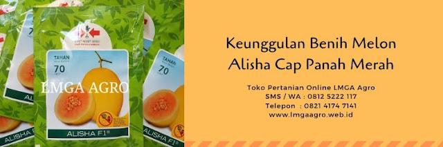 melon alisha,benih melon alisha,budidaya melon,tanaman melon,lmga agro