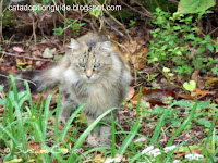 Feral Cat crossing meadow