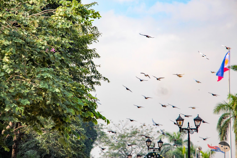 Flock of birds dancing in the Rizal Park, Philippines