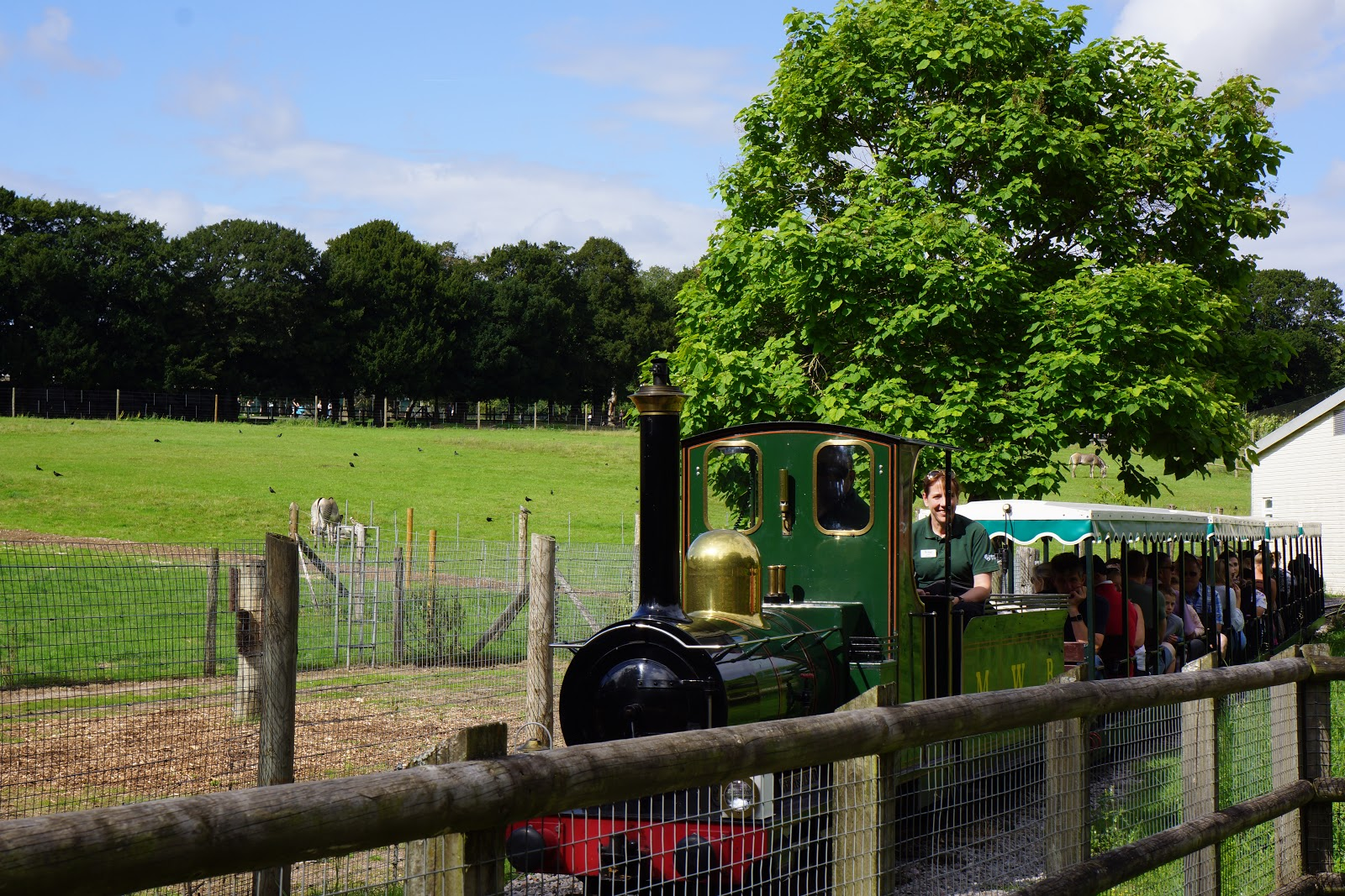 land train at marwell zoo