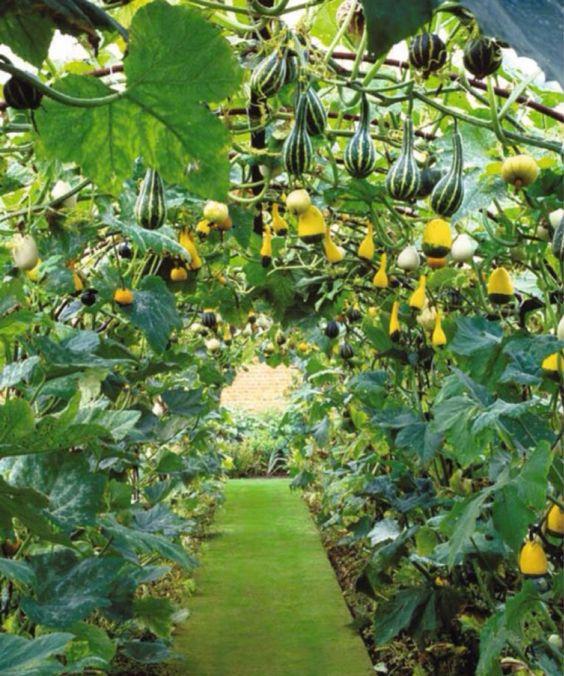 30 Amazing Ideas For Growing A Vegetable Garden In Your: Grow Your Own Vegetables