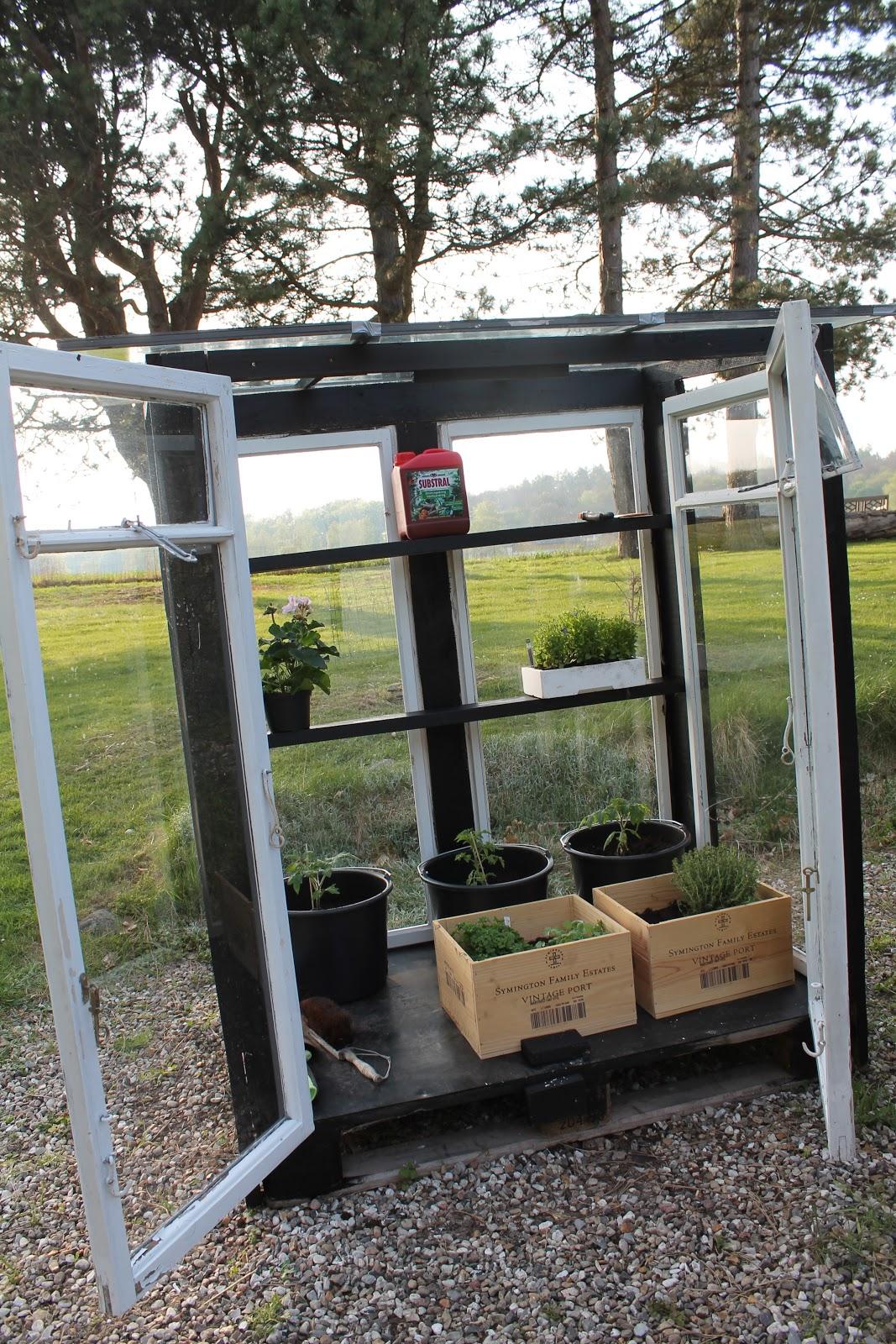 Byg selv drivhus af gamle vinduer – Pileflethegn jem og fix