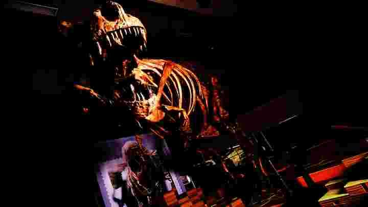 Maior Tiranossauro rex do mundo