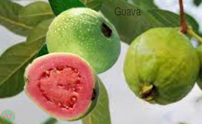 guava; guava fruit