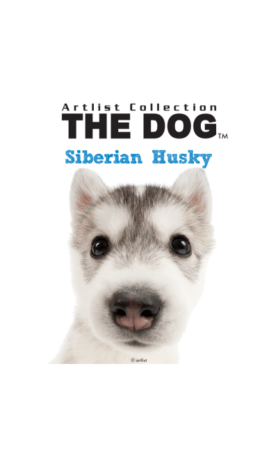 THE DOG Siberian Husky