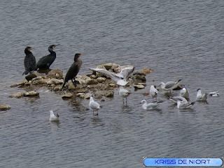 Les oiseaux prennent une pause les pieds dans l'eau ou sur les rochers