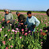 Afghanistan : Still the King of Opium
