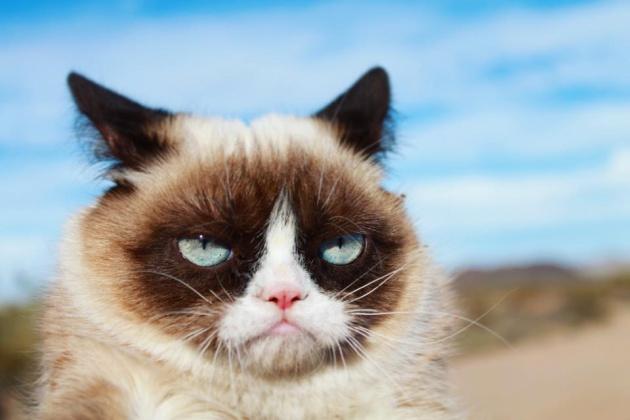 Ha muerto la gata Grumpy Cat