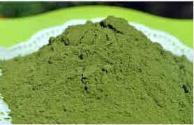 Cara membuat teh daun kelor | membuat serbuk daun kelor dan manfaatnya