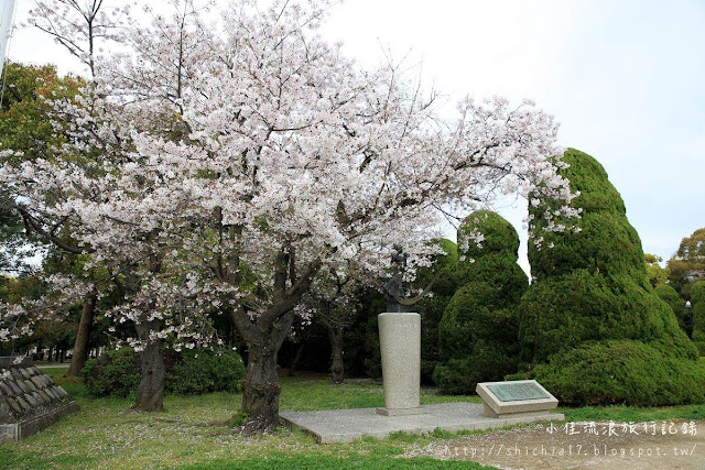 廣島和平紀念公園櫻花&本通商店街